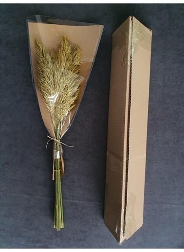Kuru Çiçek Deposu Kuru Çiçek Şoklanmış 10'Lu Pampas Otu Karışık 60 Cm Sarı